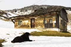 Old abandoned house guarded by a dog Royalty Free Stock Photography