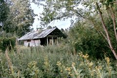 Old abandoned house among the lush summer greenery in the forest.  stock photos