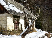 Old abandoned house. With poor old dried tree in winter day royalty free stock image
