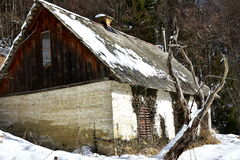 Old abandoned house. With poor old dried tree in winter day stock images