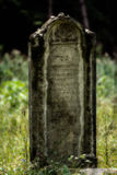 Old abandoned Jewish cemetery. Blurred effect Illustration Stock Images
