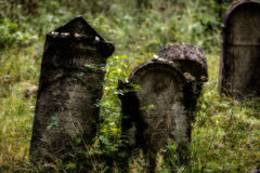 Old abandoned Jewish cemetery. Blurred effect Illustration Stock Photos