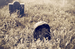 Old Abandoned Pioneer Cemetery. An overgrown pioneer cemetery is sepia Royalty Free Stock Image