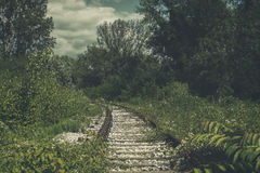 Old, abandoned railway tracks, overgrown with nature Royalty Free Stock Photography