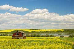 Old abandoned red barn in canola Royalty Free Stock Photos