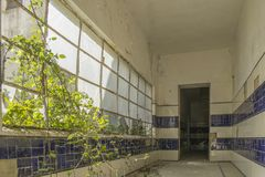 Old abandoned sanatorium on Portugal. Old abandoned sanatorium, inside view, corridor revested with ceramic tiles, vegetation broken lateral window stock image