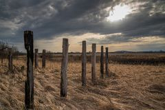 Old abandoned vineyard with dry grass and wooden pillars in sunset Stock Images