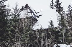 Ruins of an old wooden house in the forest stock images