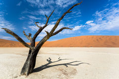 Old acacia tree in the deadvlei Stock Images