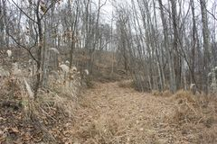 Hiking trail in forest. An old access road, once used in oil field work, now is a hiking trail royalty free stock image