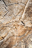 Old Age. This was an interesting tree that had been cut down in Yellowstone National Park. I`ve always loved tree rings and this one had quite a few along with Stock Images