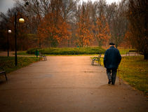 Old aged man walks in park Royalty Free Stock Photo