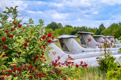 Old aircrafts in elderberry bush, Aero L-29 Delfin Maya czechoslovakian military jet trainer. On an abandoned airfield in Ukraine stock images