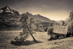 Old alpine stable and sloped tree. Vintage image of an abandoned swiss stable and  an old sloped tree, with the Alps mountains and lake Walensee in the Stock Image