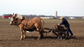 An old amish farmer seeding his fields Royalty Free Stock Photos