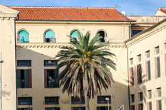 Old ancient building with windows and doors and in front of a palm tree growing on the seafront near the port of Rome Royalty Free Stock Photo