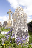 Old ancient Irish Celtic graveyard with bluebells royalty free stock photos