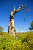 Old ancient single twisted tree Stock Image