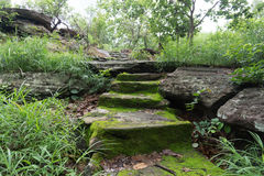 Old ancient stone stairs with moss. Old ancient stone stairs with moss back ground Royalty Free Stock Photo
