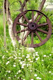 Old ancient wheel and summer grass Stock Image