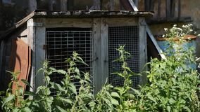 Old animal cage. Green nettles and flower stock video