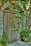 Old antique door. Wooden gate decorated with green climbing plant stock photography