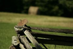 Old antique hoe farm tool Royalty Free Stock Images