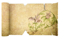 Old antique scroll paper Royalty Free Stock Photography