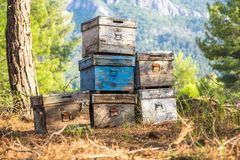Old apiary in piney forest Stock Images