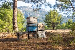Old apiary in summer piney forest Royalty Free Stock Photo