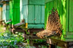 Free Old Apiary With Bees, Summer In Countryside Stock Image - 160270541
