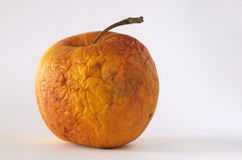 Old apple. Very old apple on a white background Stock Image