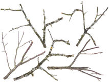 Old apple and cherries tree branches isolated Royalty Free Stock Photos