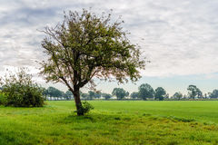 Old apple tree against a cloudy sky in backlit Royalty Free Stock Images