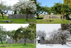 Old apple tree - four seasons. Old apple tree in all four seasons from the same perspective Stock Image