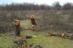Old apple-tree garden Stock Photography