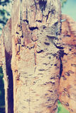 Old apple tree trunk on a sunny summer day, vintage/retro style Royalty Free Stock Photo
