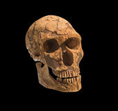 Old archaeological find human skull cranium. Royalty Free Stock Photo