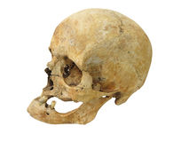 Old archaeological find human skull cranium isolated on white. Background stock photos