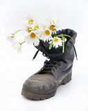 Old army boot and bouquet of chamomiles Stock Photography