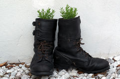Old army boot filled with lavender Stock Photo
