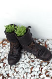 Old army boot planters with lavender Stock Images