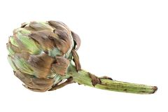 Old artichoke Stock Images