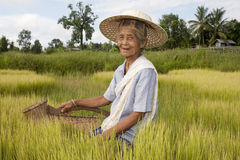 Old Asian woman at the paddy-field Stock Image