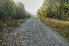 old asphalt road passes through the fabulous autumn forest stock image