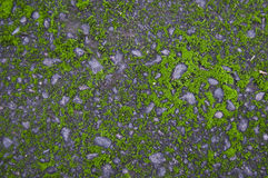 Old asphalt rock cement with moss Royalty Free Stock Images