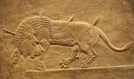 Old assyrian relief of a lion beig hunted Royalty Free Stock Image