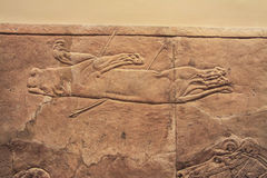 Old assyrian relief of a lion beig hunted. With arrows stock image