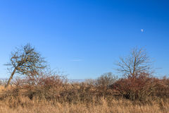 Old autumn field under the moon and blue sky Royalty Free Stock Photography