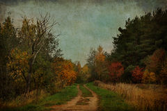 Old autumn forest Royalty Free Stock Images